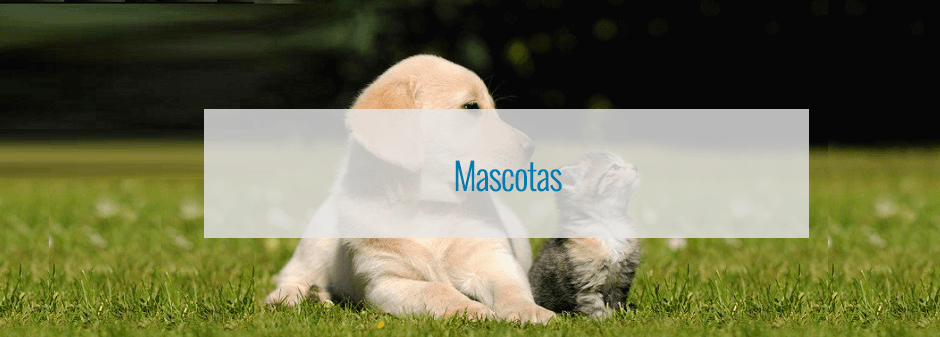 Cupones de descuento para Mascotas