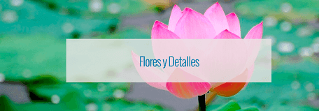 Cupones de descuento para Flores y detalles